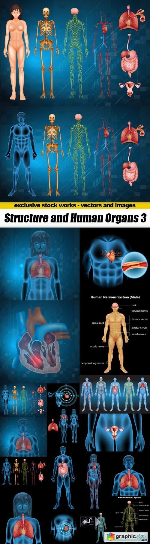 Structure and Human Organs 3 - 20xEPS