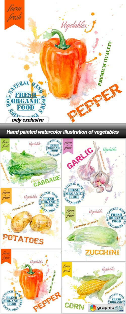 Hand painted watercolor illustration of vegetables - 6 EPS
