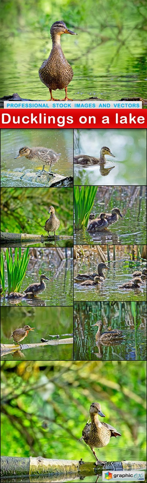 Ducklings on a lake - 10 UHQ JPEG