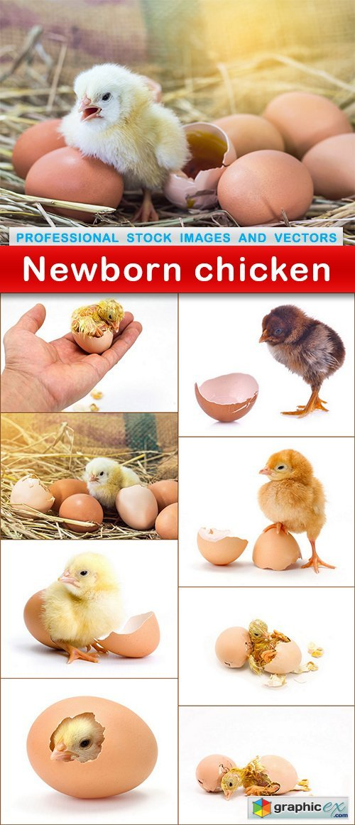 Newborn chicken - 9 UHQ JPEG