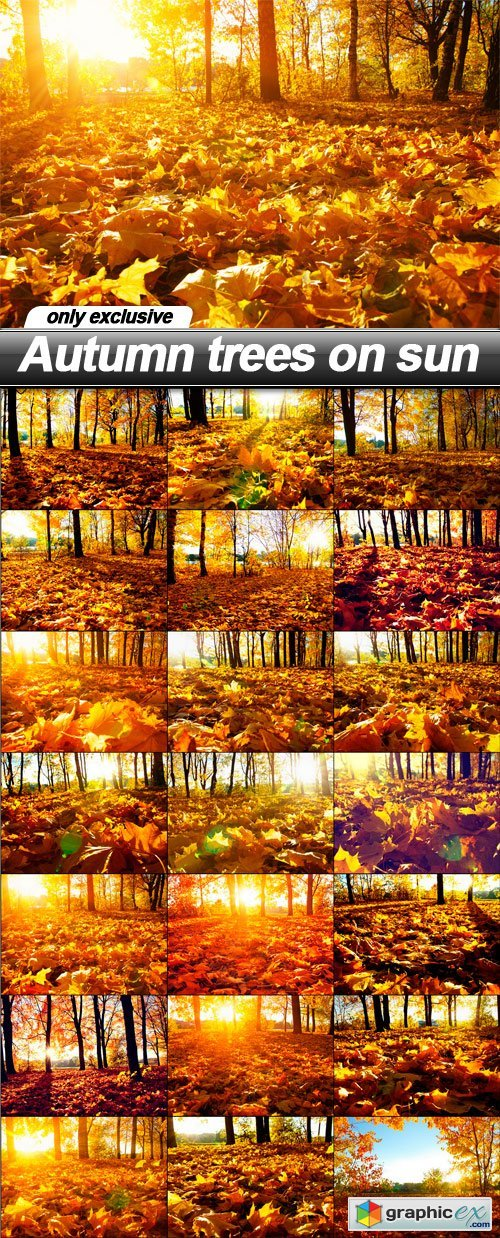 Autumn trees on sun - 21 UHQ JPEG