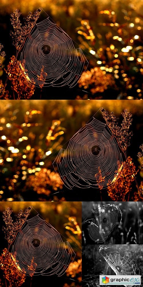 Morning web in golden autumn
