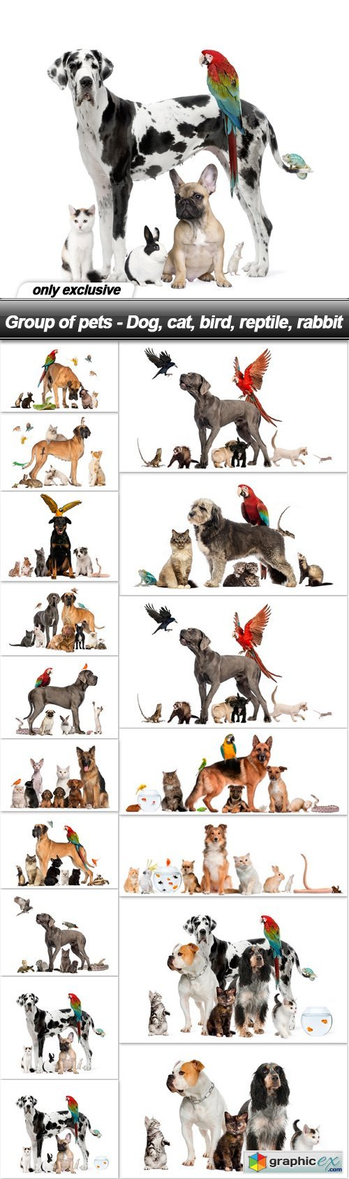 Group of pets - Dog, cat, bird, reptile, rabbit - 17 UHQ JPEG