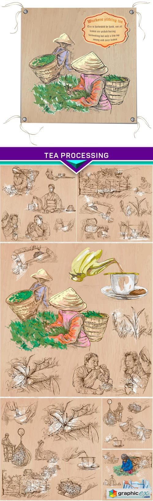 Hand drawn vector illustration,Tea Processing 7X EPS