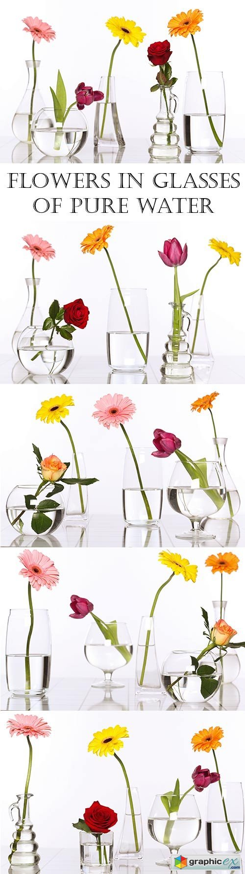 Flowers in glasses of pure water