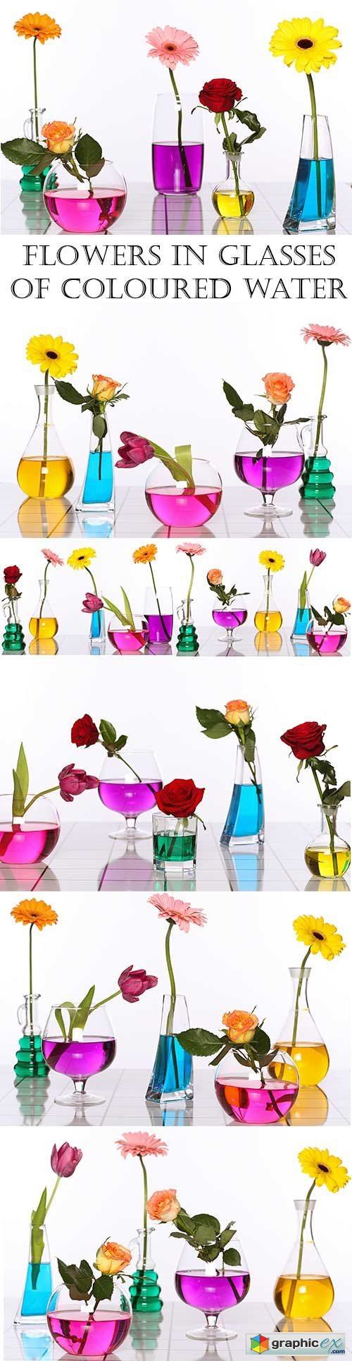 Flowers in glasses of coloured water