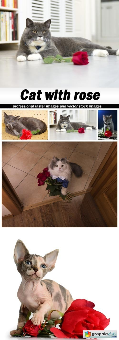 Cat with rose - 5 UHQ JPEG