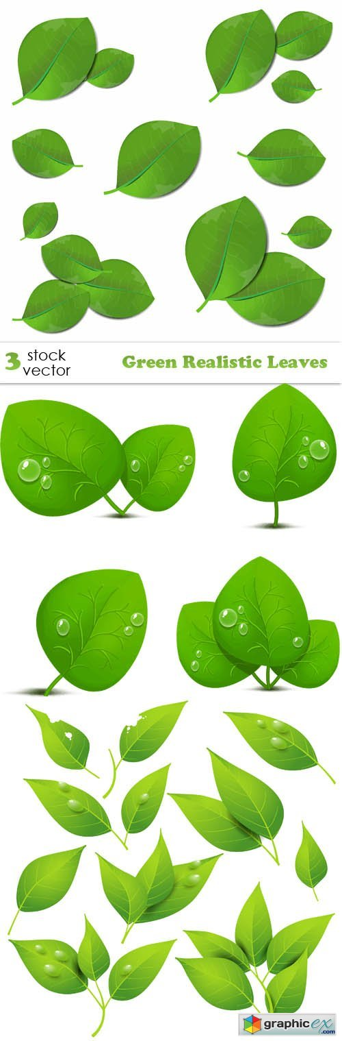 Green Realistic Leaves