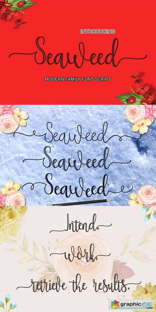 Seaweed Font Family