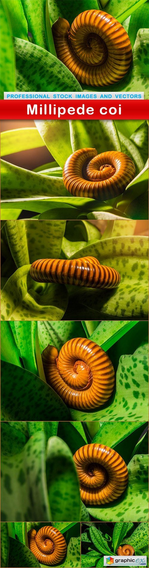 Millipede coi - 7 UHQ JPEG