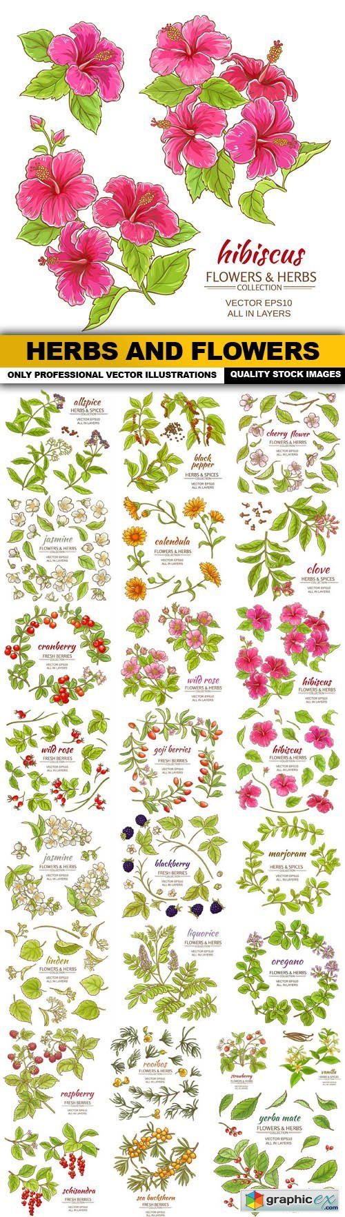 Herbs And Flowers - 25 Vector