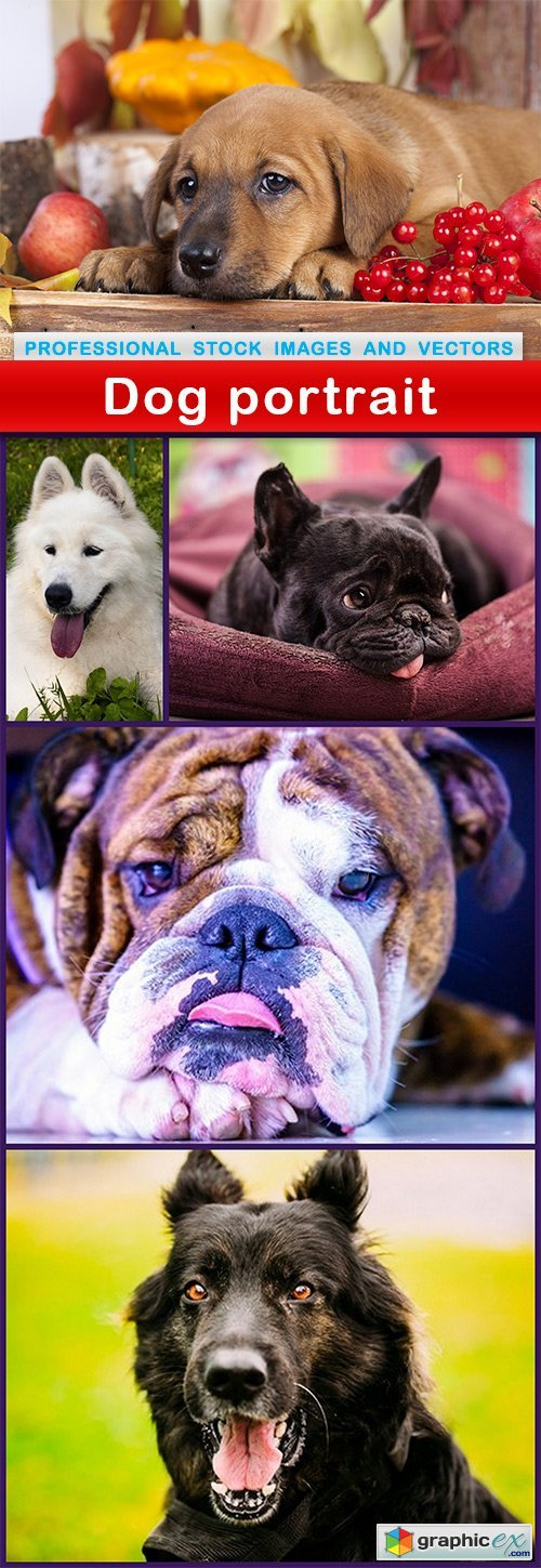 Dog portrait - 5 UHQ JPEG
