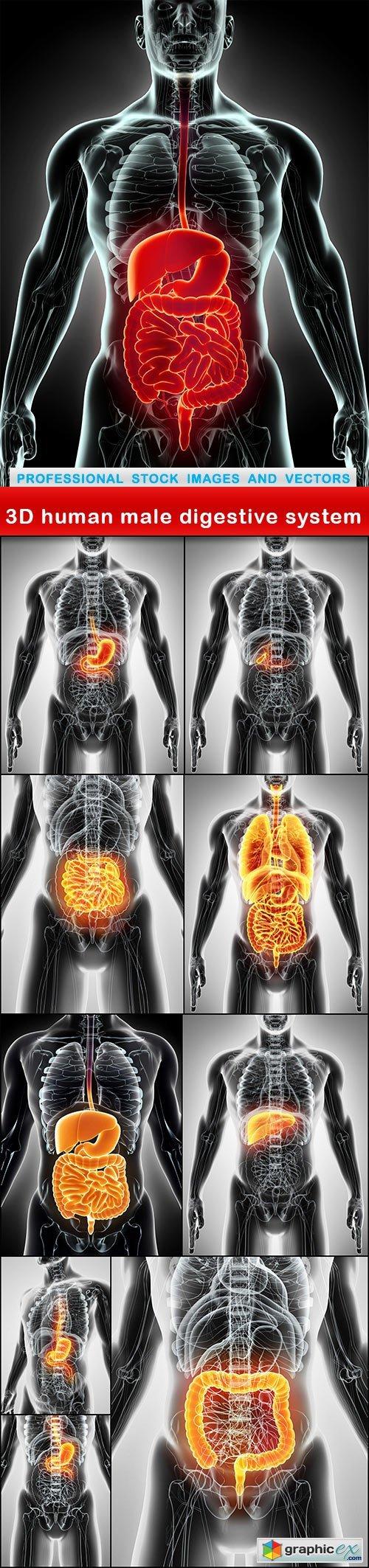 3D human male digestive system - 10 UHQ JPEG