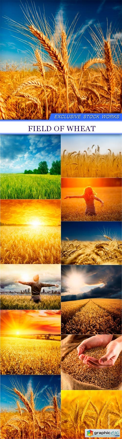 Field of wheat 11X JPEG