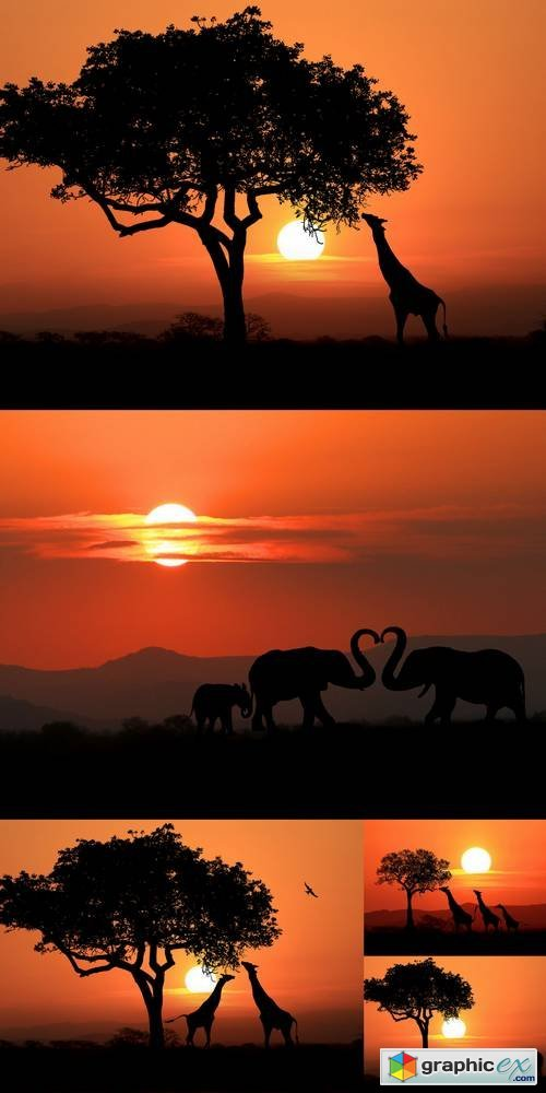 Beautiful Silhouette of African Elephants & Giraffes at Sunset