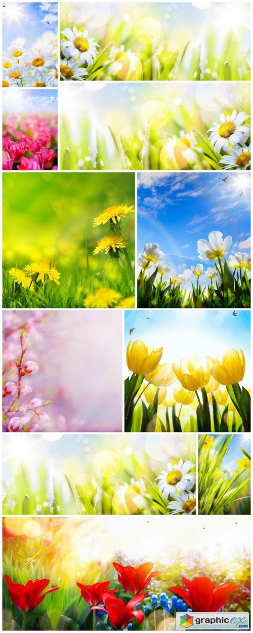 Art abstract sunny spring flower background 11X JPEG