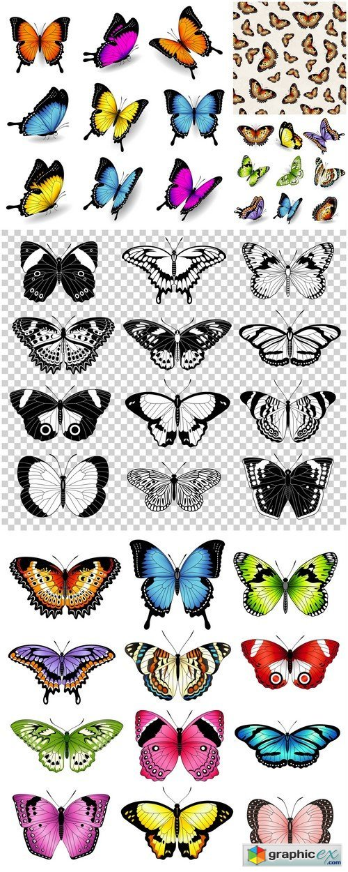 Color butterfly illustrations 5X EPS
