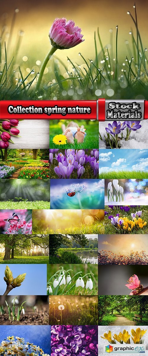 Collection spring nature forest grass sprout sprout tulip flower snowdrop 25 HQ Jpeg