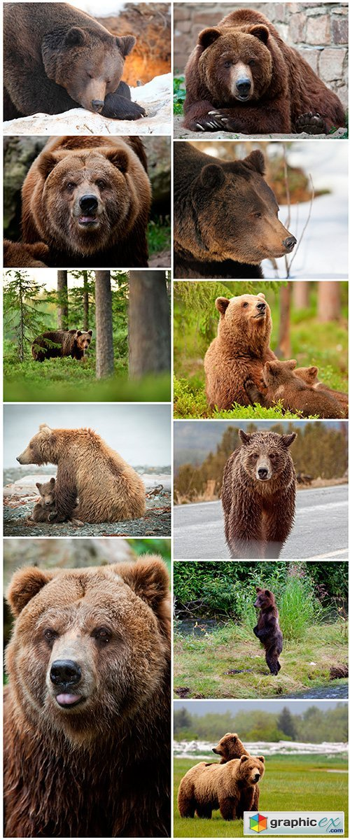 Grizzly set 1 - 11UHQ JPEG