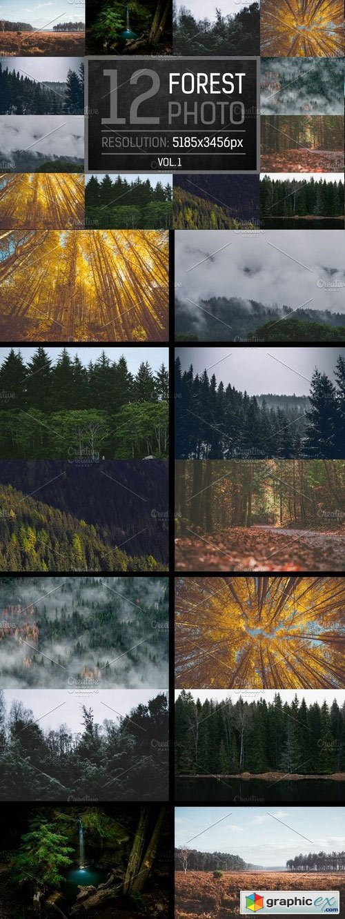 12 Forest Photo Vol.1
