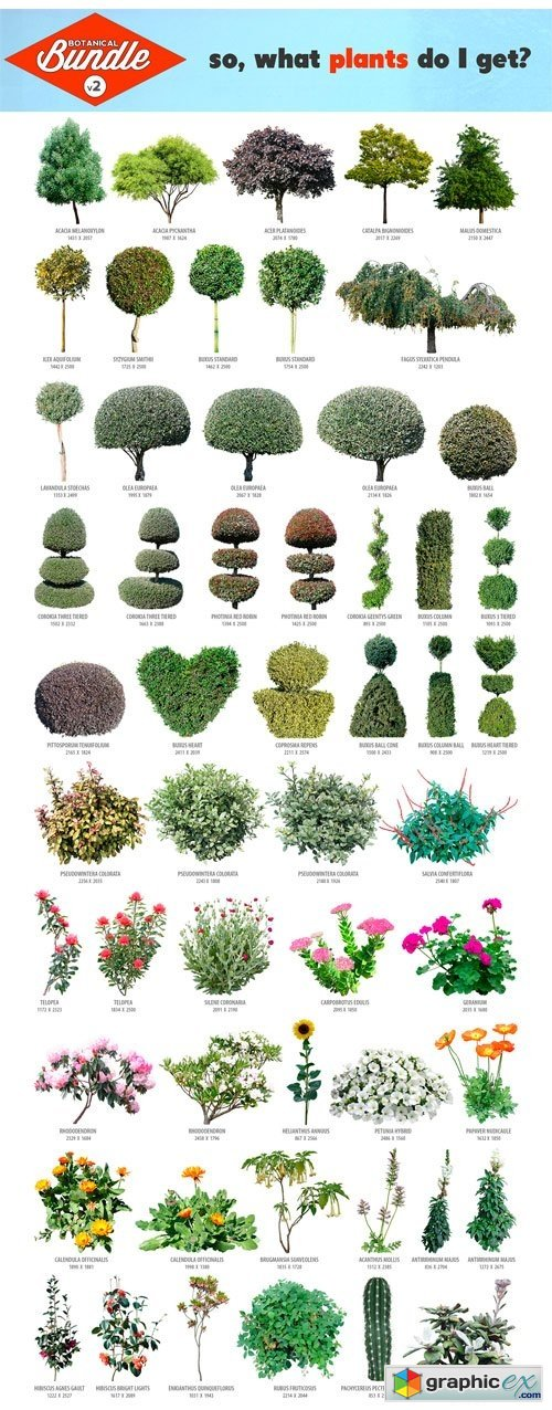 Botanical Bundle v2
