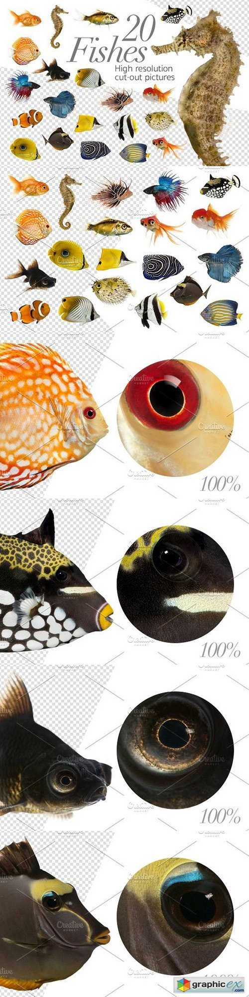 20 Fishes Cut-out High Res Pictures