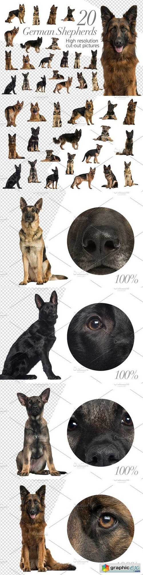 20 German Shepherds - Cut-out Pics