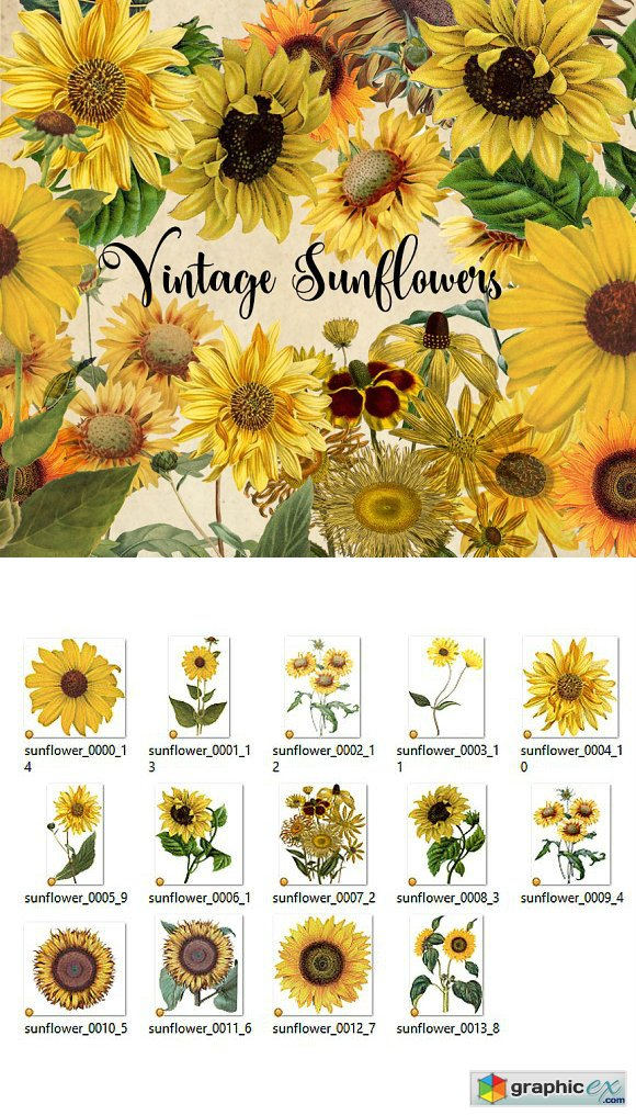 Vintage Sunflowers Clipart 1544300
