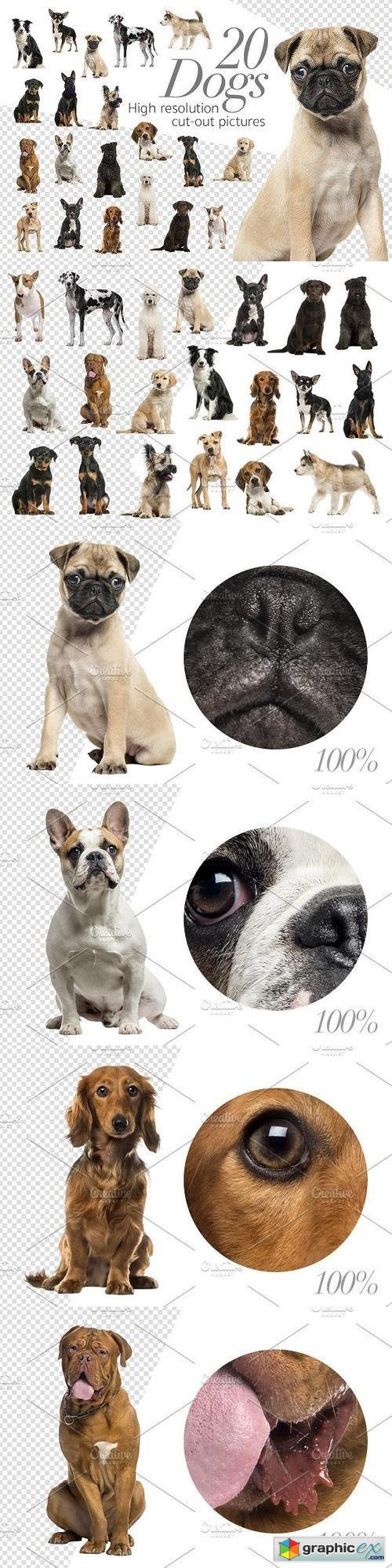 20 Dogs - Cut-out High Res Pictures