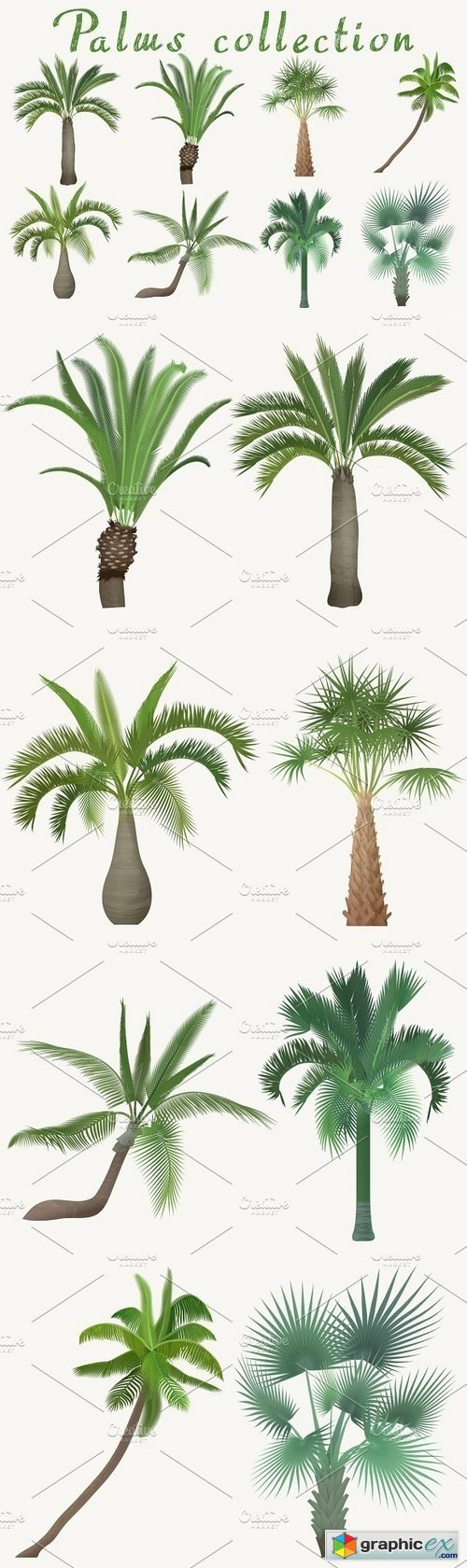 Exotic tropical realistic palm tree