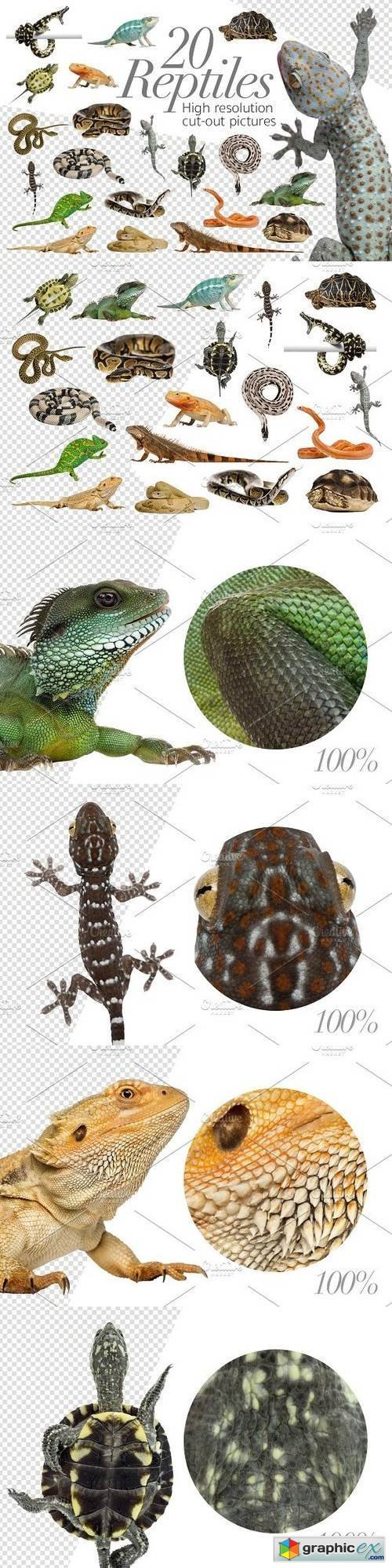 20 Reptiles - Cut-out Pictures