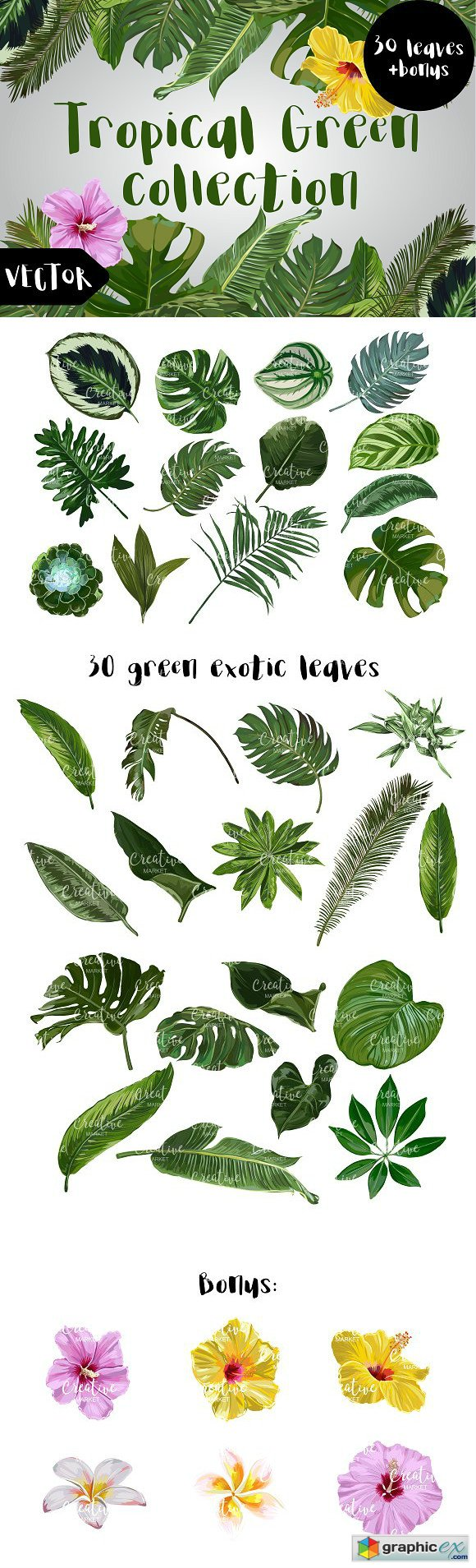 Tropical Green Vector Collection