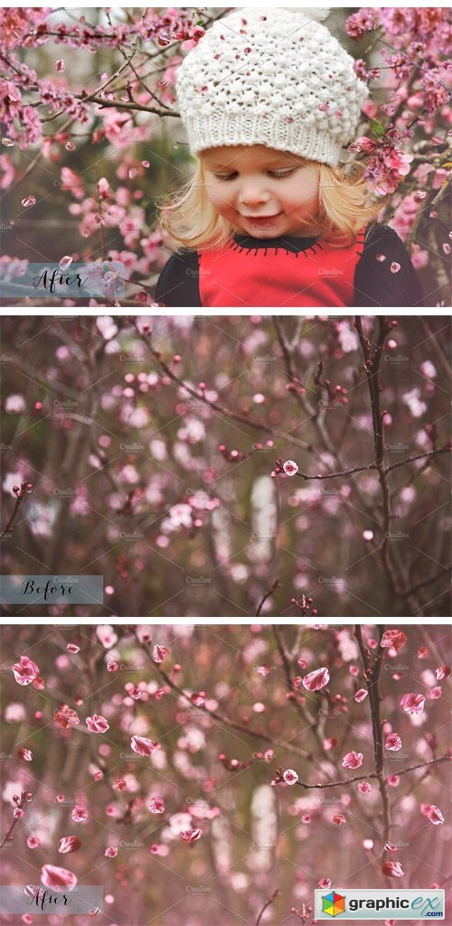 Fine Art Blossom Overlays