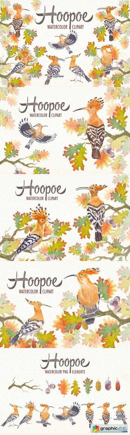 watercolor hoopoe bird clipart stock images free