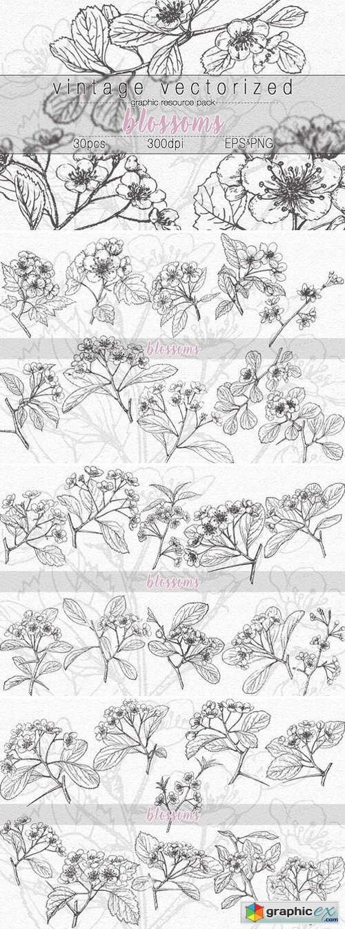 VintageVectorized-Blossoms Clipart
