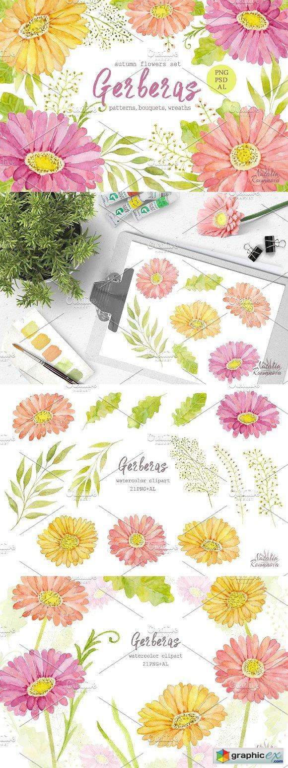 Watercolor set of gerbera flowers