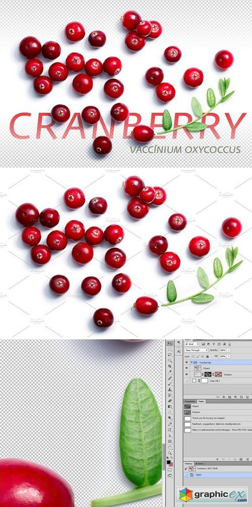 Cranberries from above 1891162