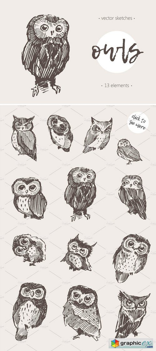 Sketches of owls