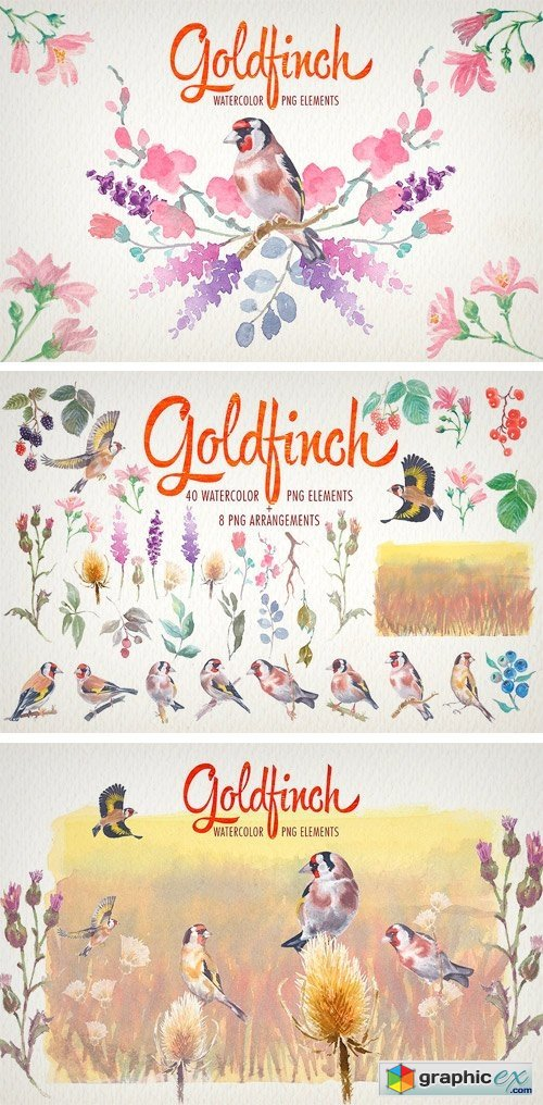 Watercolor Goldfinch Bird Clipart