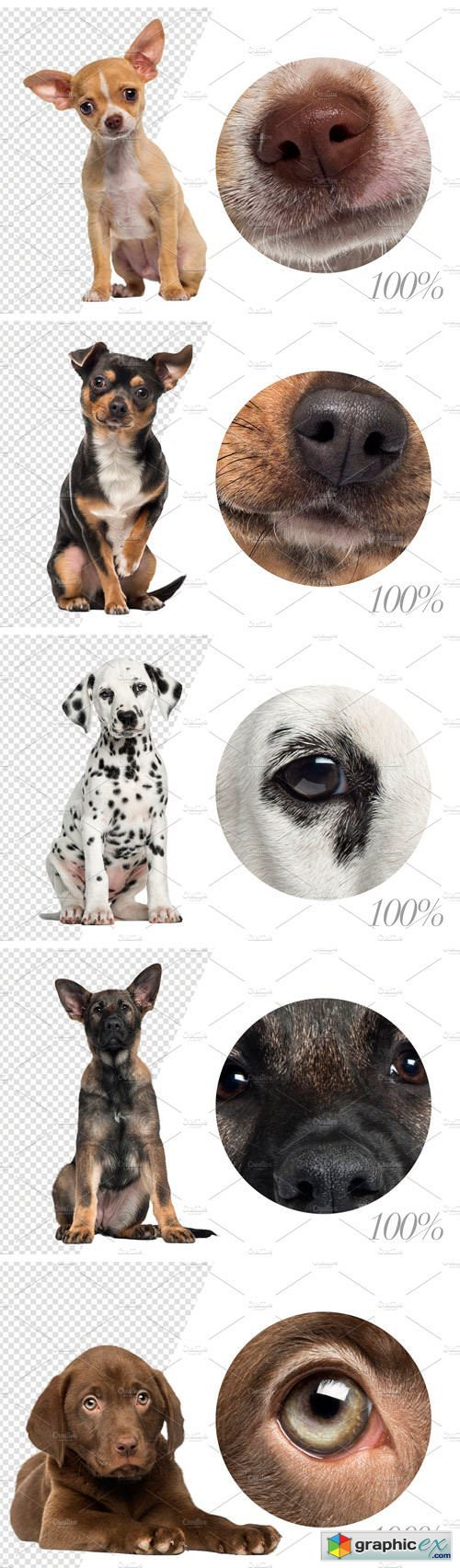 100 Dogs Bundle - Cut-out Pictures