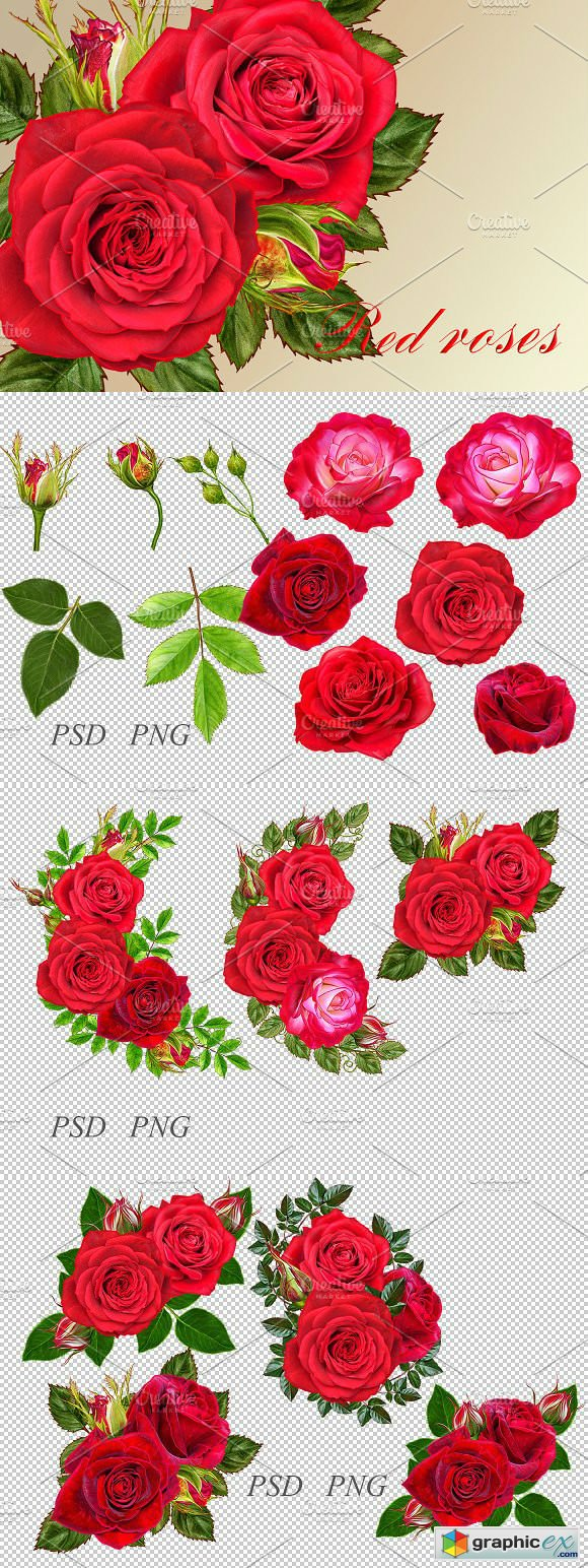 Collection of red roses
