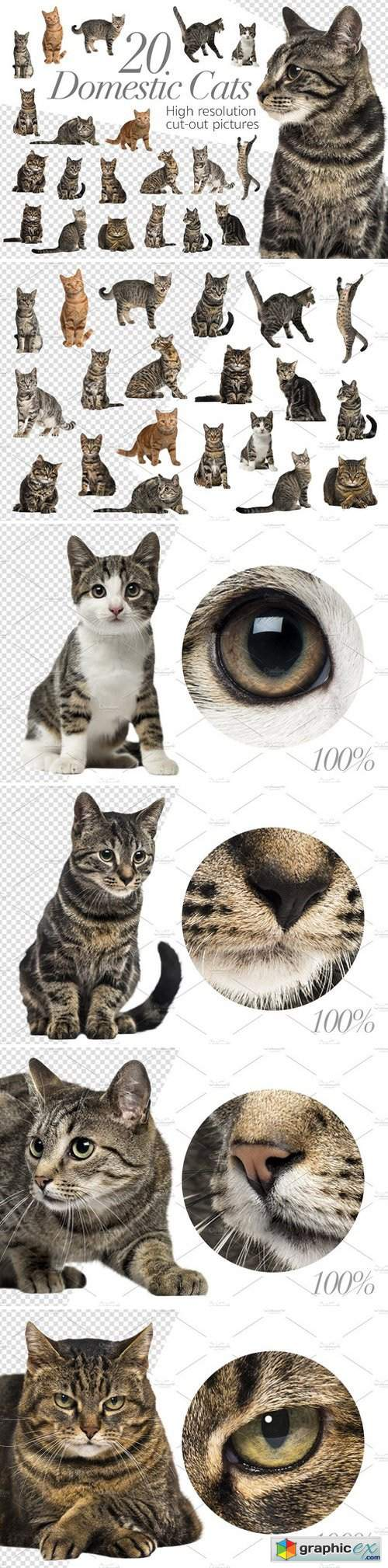 20 Domestic Cats - Cut-out Pictures