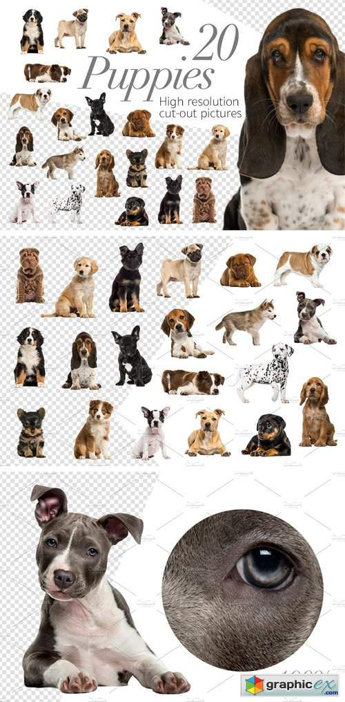 20 Puppies - Cut-out Pictures