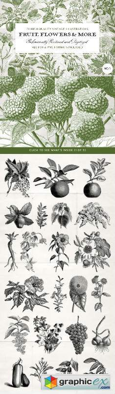 70 Flower & Fruit Illustrations No3
