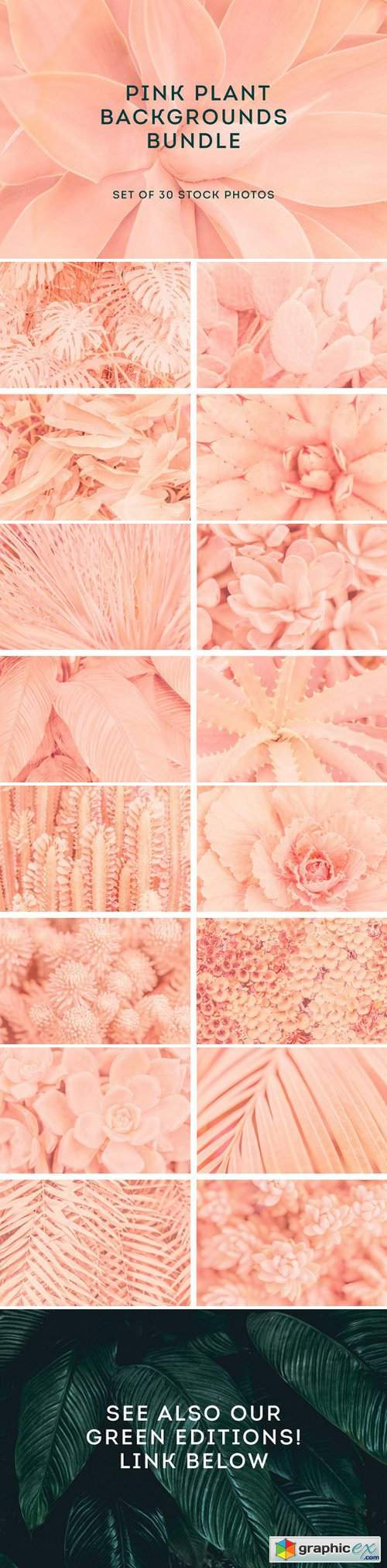Pink backgrounds bundle