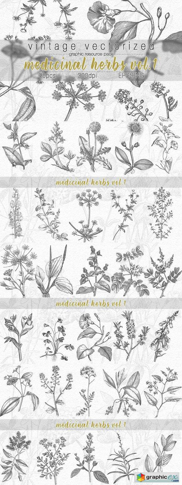 VintageVectorized- Herbs Clipart