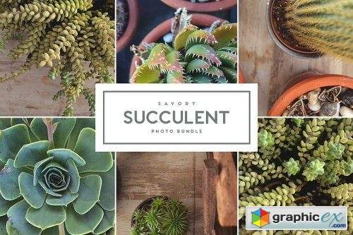 Savory Succulent Photo Bundle