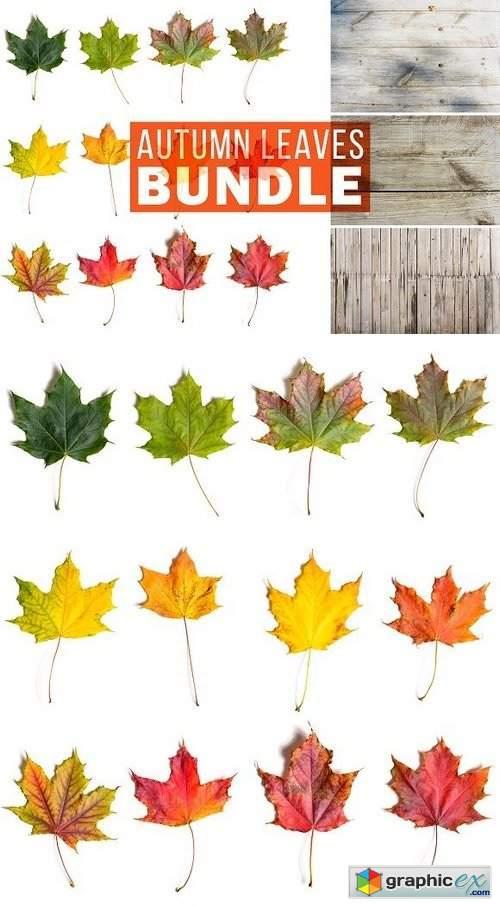 Autumn Leaves Bundle