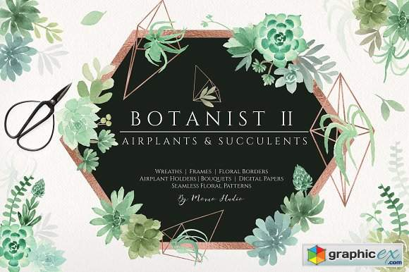 Botanist II - Airplants & Succulents