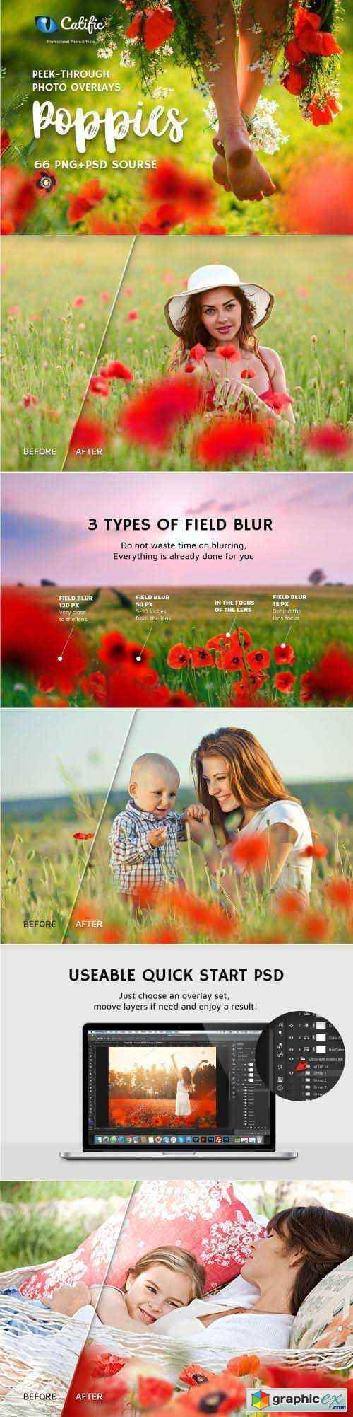 66+ Poppie Flowers Photo Overlays